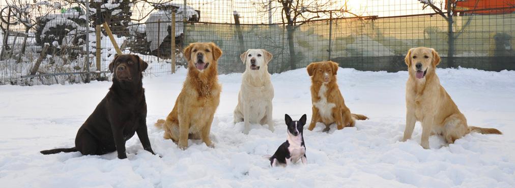 corso avanzato cani