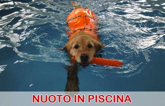 nuoto piscina cani