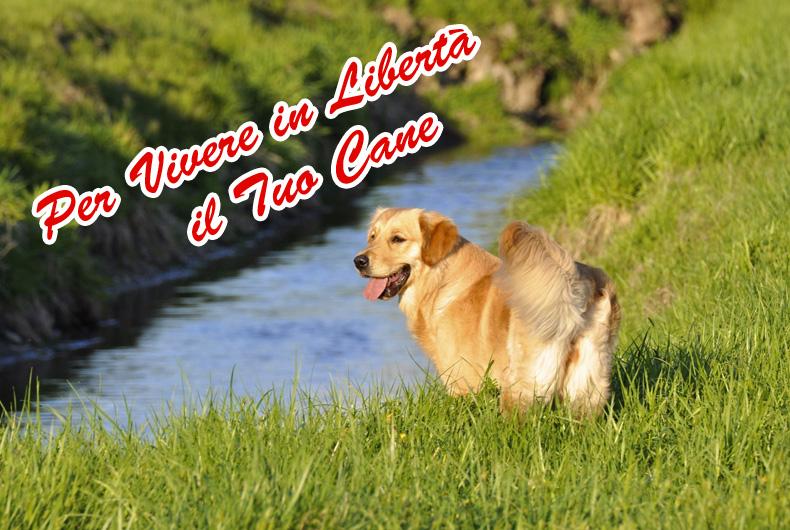 Scuola Addestramento Cani Freedog