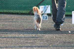 esercizio rally obedience
